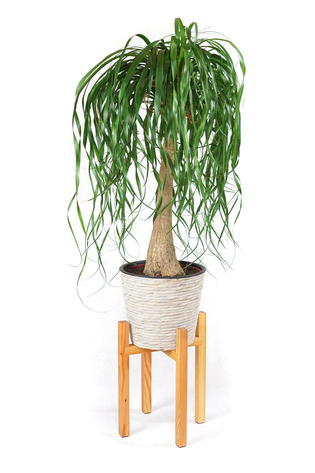 Lounge Set Pflanze